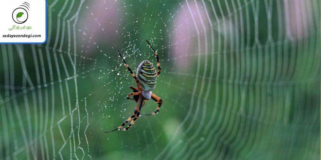 ترس از عنکبوت (Arachnophobia): شناخت ترس از عنکبوت
